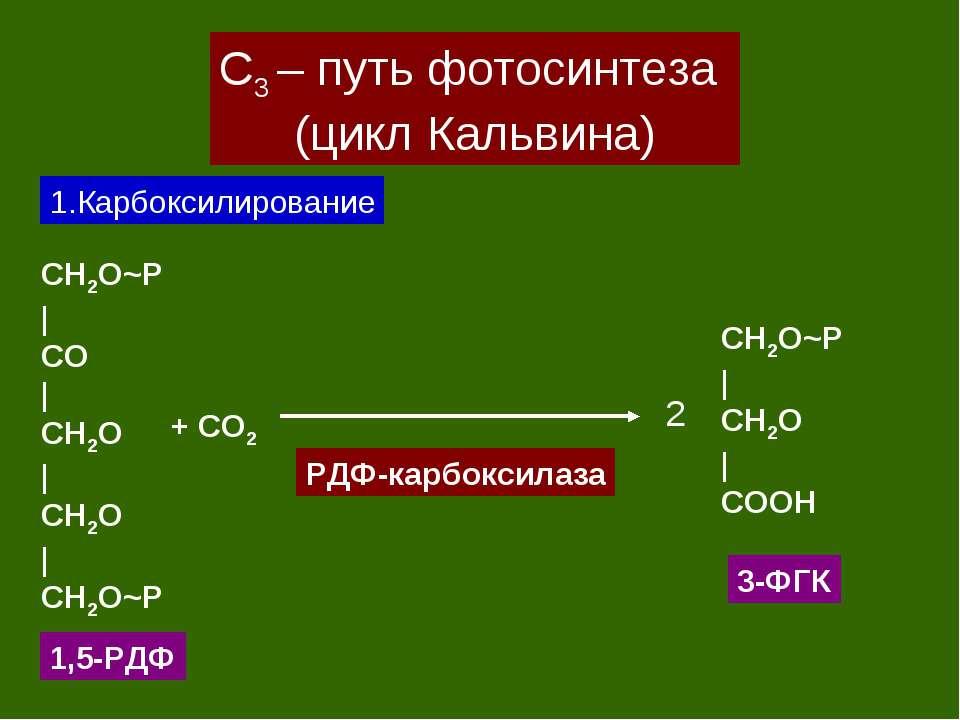 С3 – путь фотосинтеза (цикл Кальвина) 1.Карбоксилирование CH2O~P   CO   CH2O ...