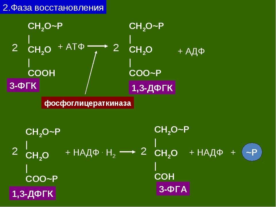 2.Фаза восстановления CH2O~P   CH2O   CОOH 3-ФГК 2 + АТФ CH2O~P   CH2O   CОO~...