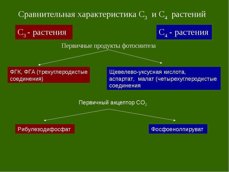 С3 - растения С4 - растения Сравнительная характеристика С3 и С4 растений Пер...
