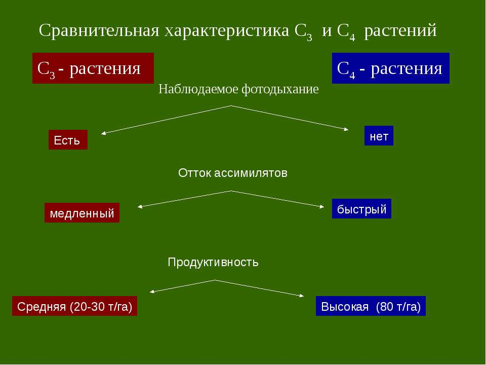 С3 - растения С4 - растения Сравнительная характеристика С3 и С4 растений Наб...