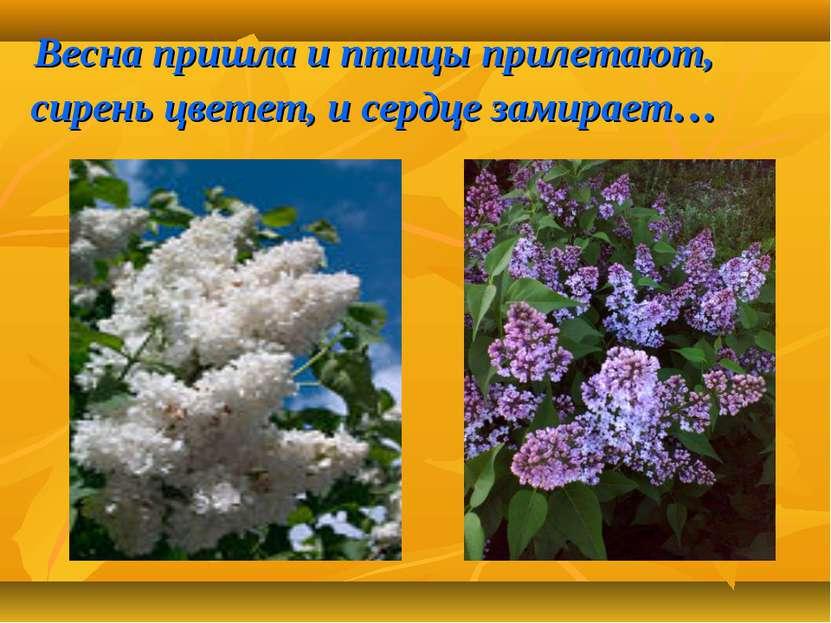 Весна пришла и птицы прилетают, сирень цветет, и сердце замирает…