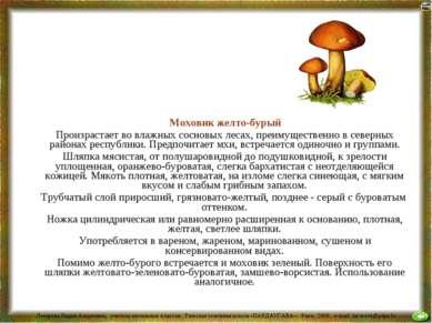 Моховик желто-бурый Произрастает во влажных сосновых лесах, преимущественно в...