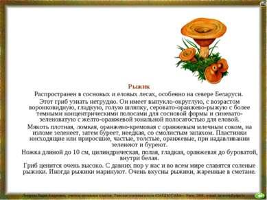 Рыжик Распространен в сосновых и еловых лесах, особенно на севере Беларуси. Э...