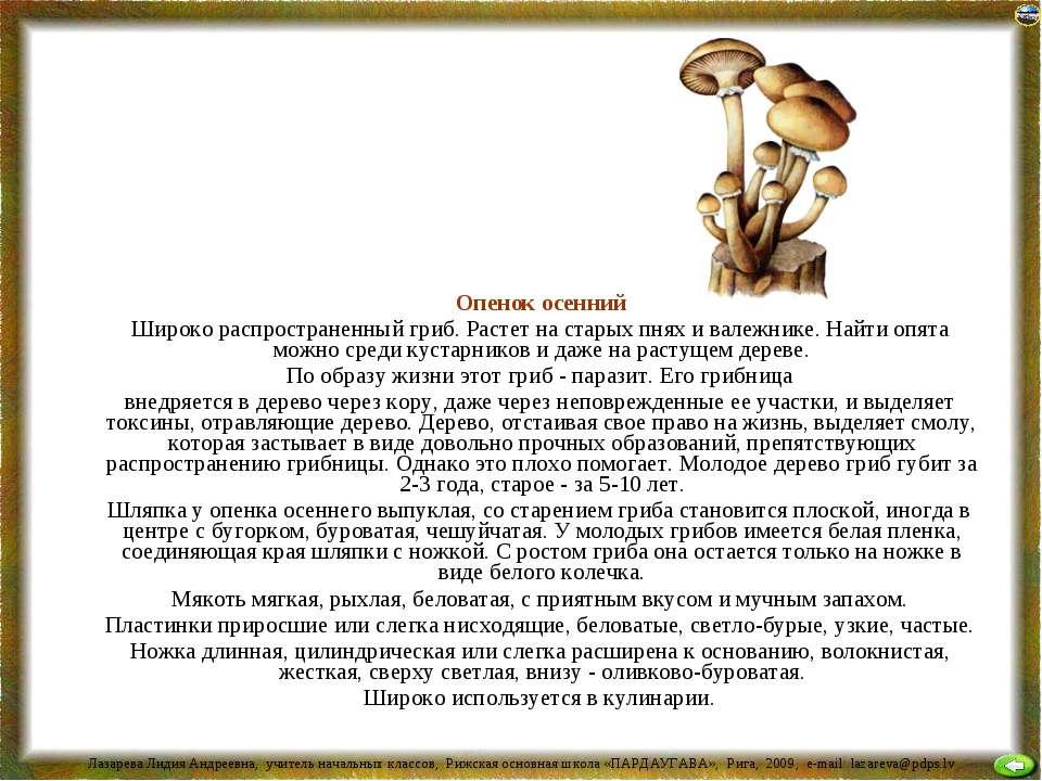 Опенок осенний Широко распространенный гриб. Растет на старых пнях и валежник...