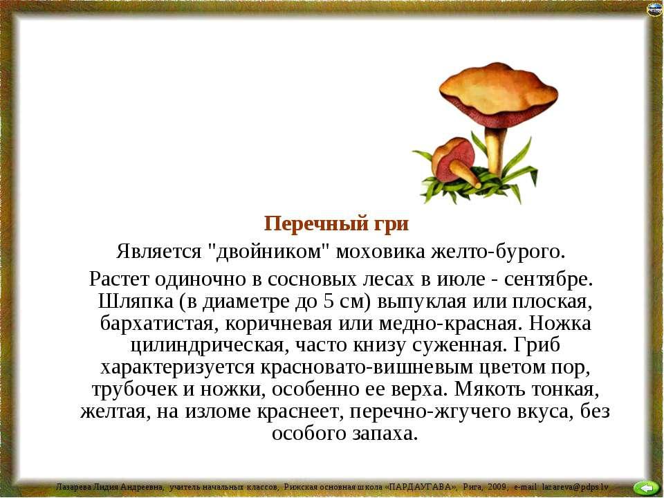 """Перечный гриб Является """"двойником"""" моховика желто-бурого. Растет одиночно в с..."""