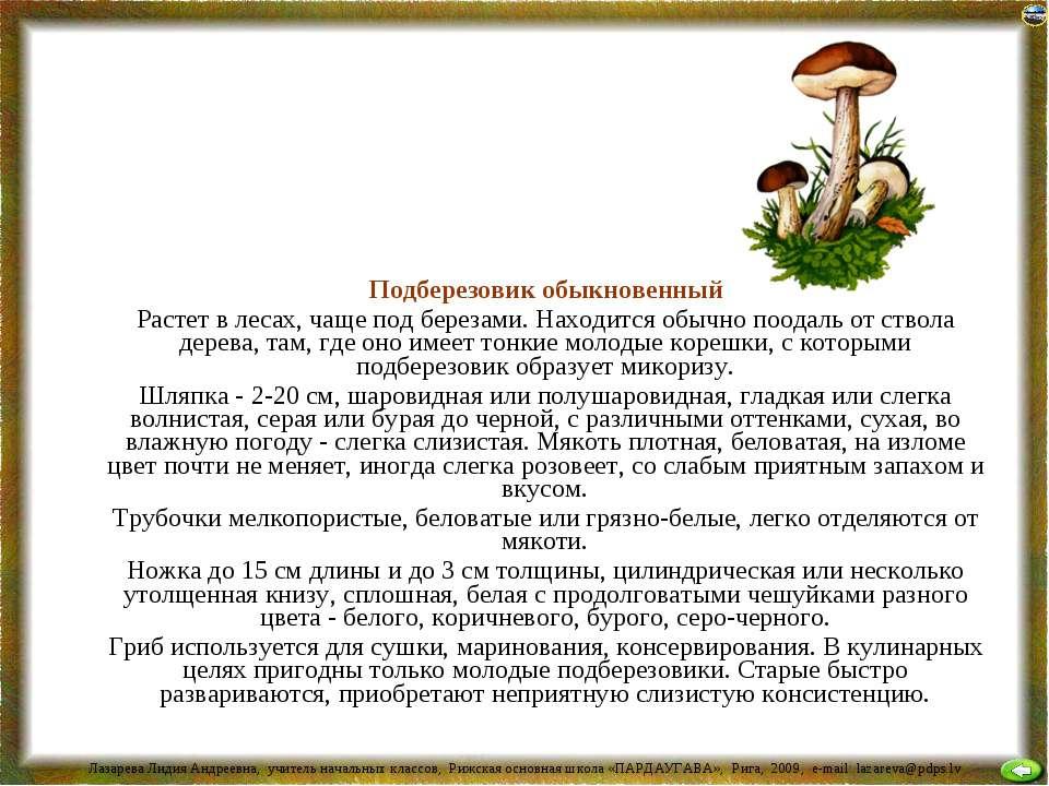Подберезовик обыкновенный Растет в лесах, чаще под березами. Находится обычно...