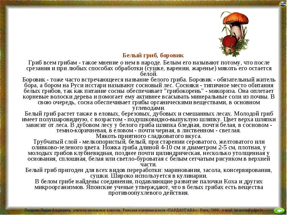 Белый гриб, боровик Гриб всем грибам - такое мнение о нем в народе. Белым его...