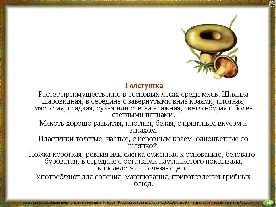 Толстушка Растет преимущественно в сосновых лесах среди мхов. Шляпка шаровидн...