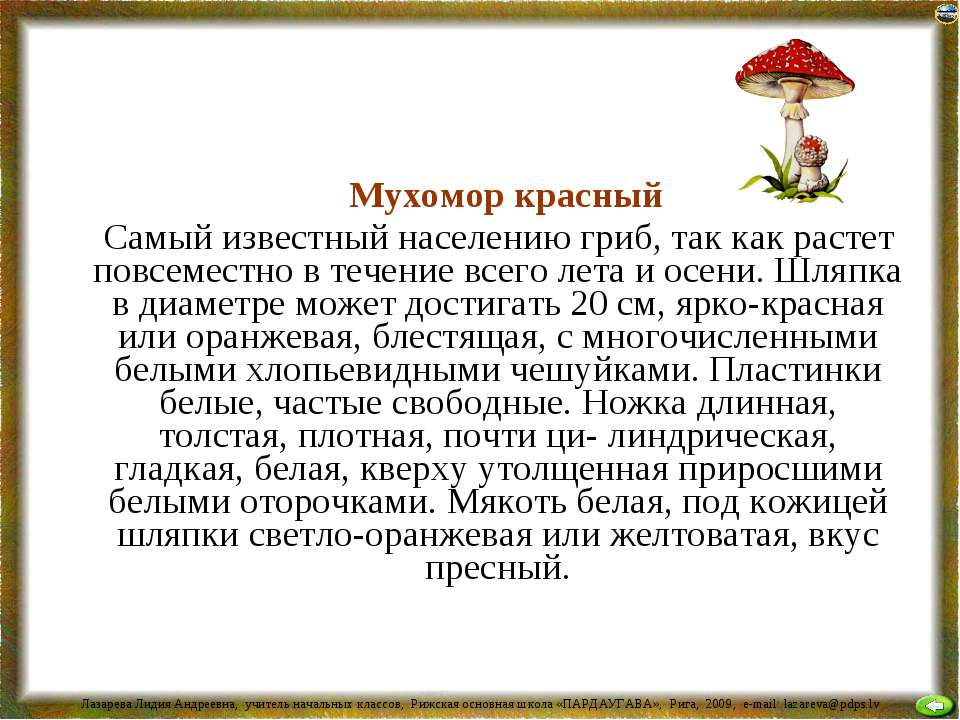 Мухомор красный Самый известный населению гриб, так как растет повсеместно в ...
