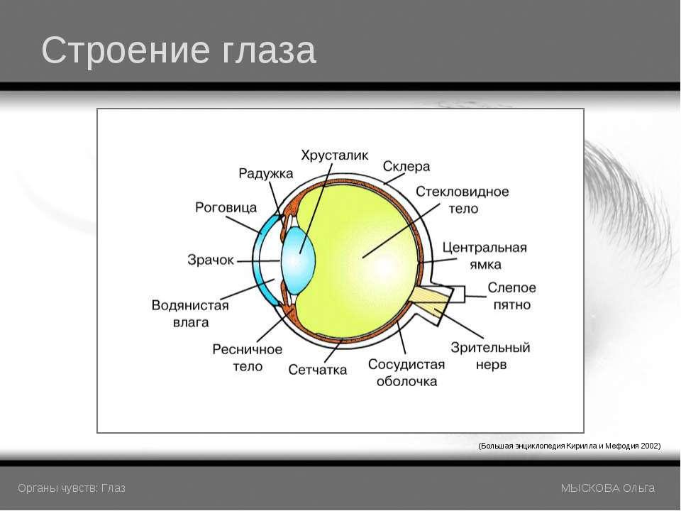 Строение глаза (Большая энциклопедия Кирилла и Мефодия 2002) Органы чувств: Г...