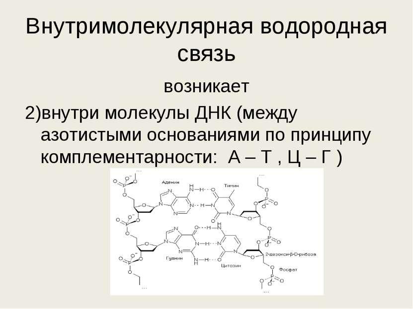 Внутримолекулярная водородная связь возникает 2)внутри молекулы ДНК (между аз...