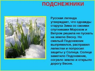 ПОДСНЕЖНИКИ Русская легенда утверждает, что однажды старуха Зима со своими сп...