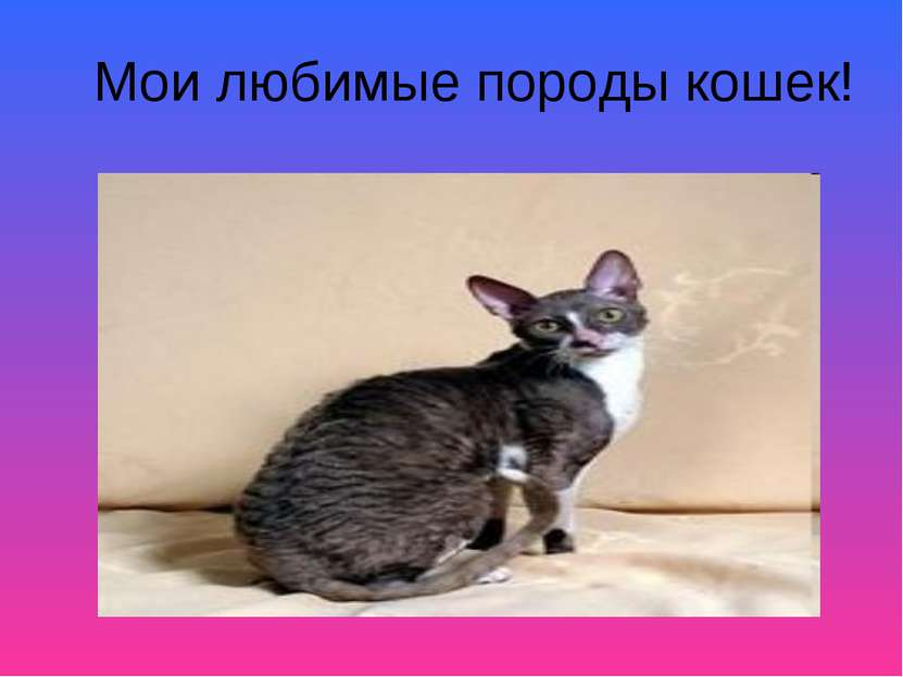 Мои любимые породы кошек!