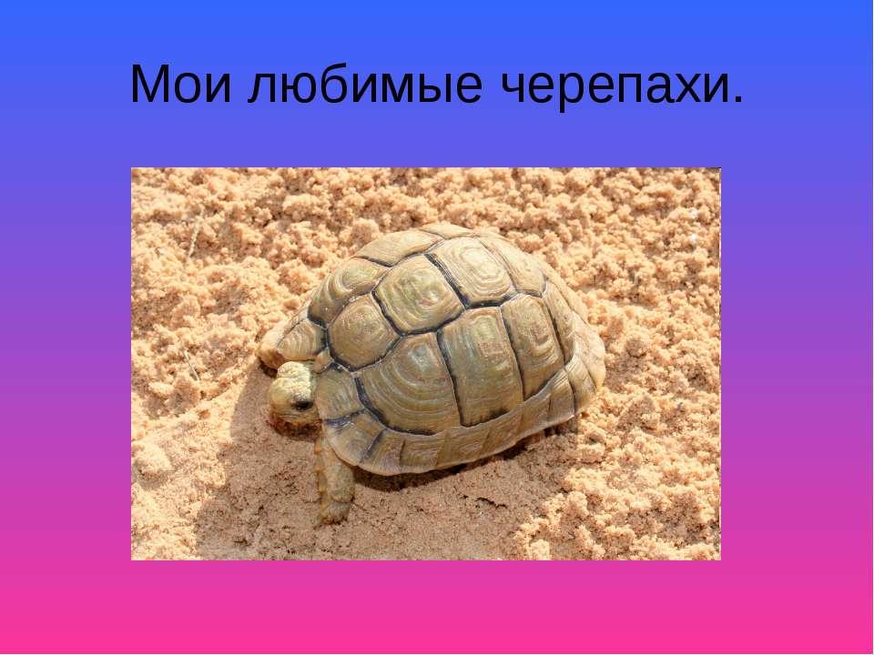 Мои любимые черепахи.