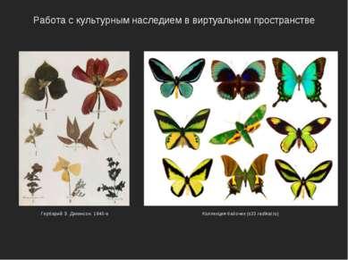 Работа с культурным наследием в виртуальном пространстве Коллекция бабочек (s...
