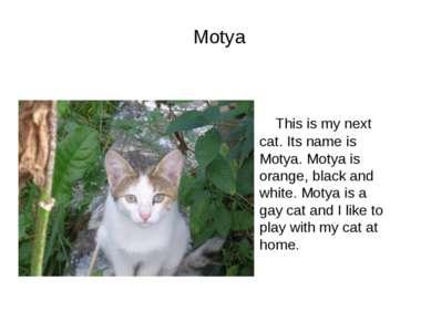 Motya This is my next cat. Its name is Motya. Motya is orange, black and whit...