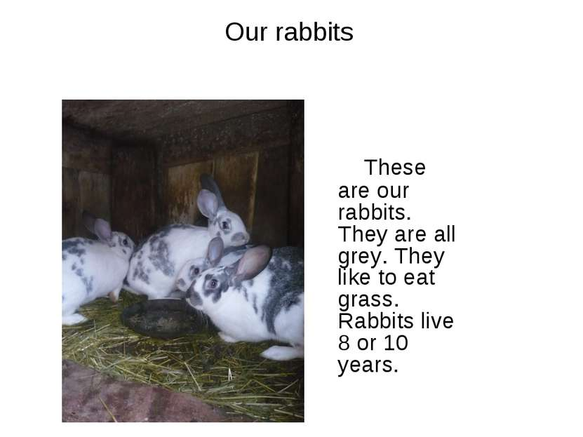 Our rabbits These are our rabbits. They are all grey. They like to eat grass....