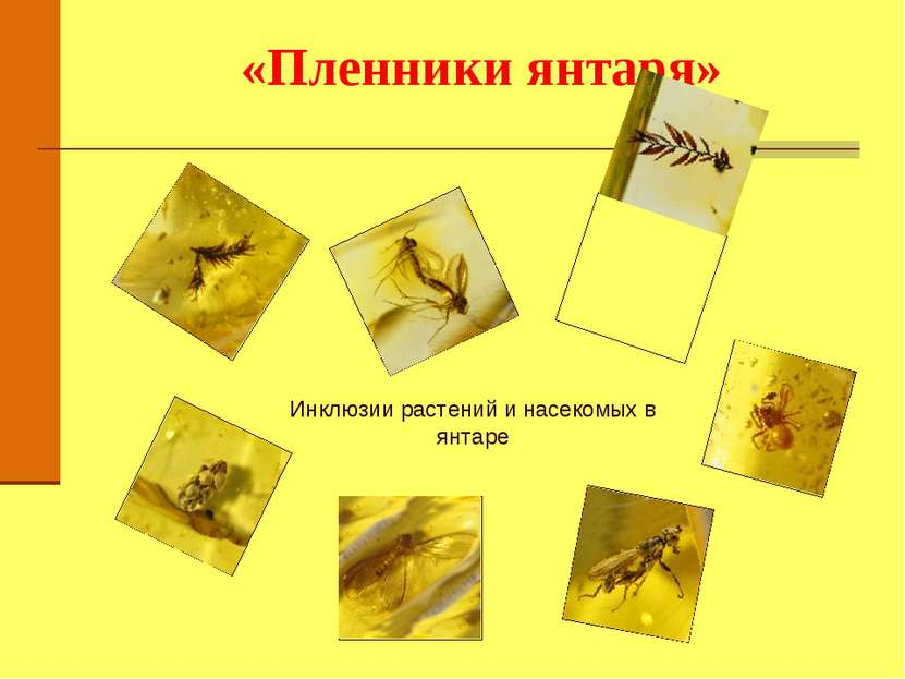 «Пленники янтаря» Инклюзии растений и насекомых в янтаре