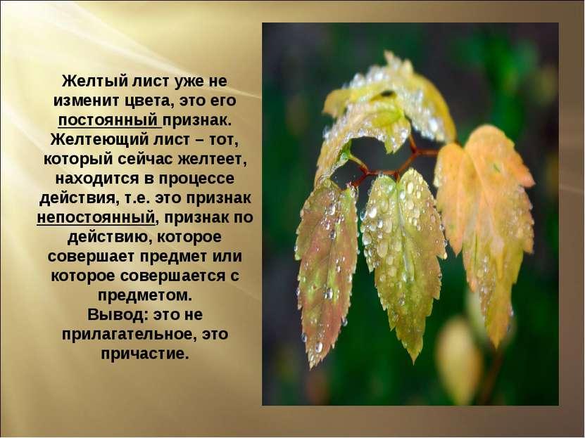 Желтый лист уже не изменит цвета, это его постоянный признак. Желтеющий лист ...