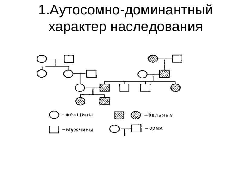 1.Аутосомно-доминантный характер наследования