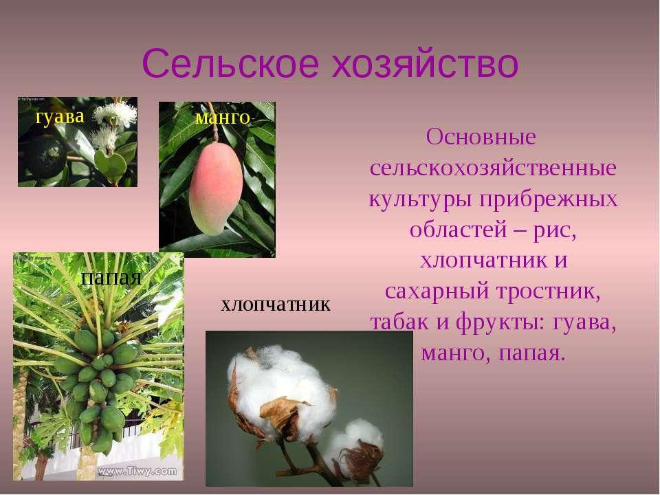 Сельское хозяйство Основные сельскохозяйственные культуры прибрежных областей...