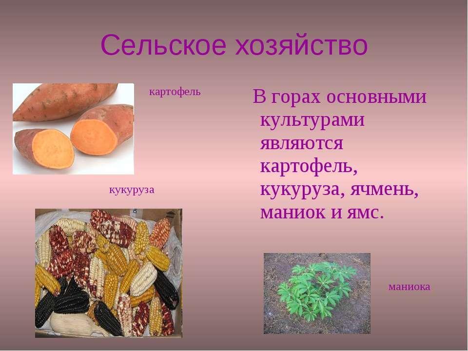 Сельское хозяйство В горах основными культурами являются картофель, кукуруза,...