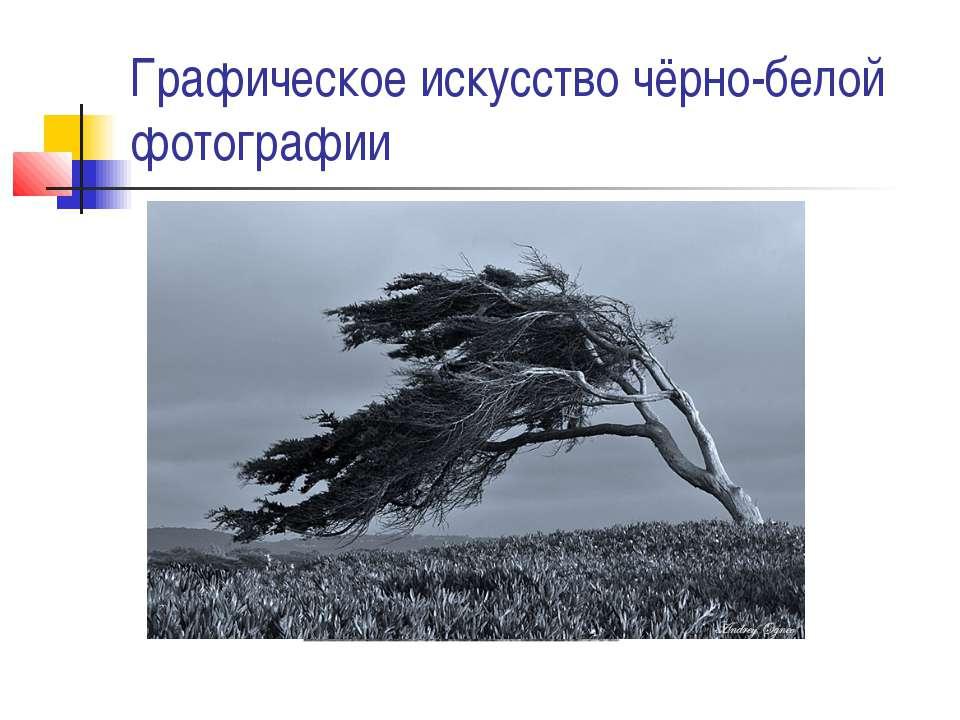 Графическое искусство чёрно-белой фотографии