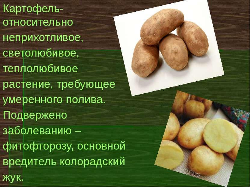 Картофель теме презентацию по
