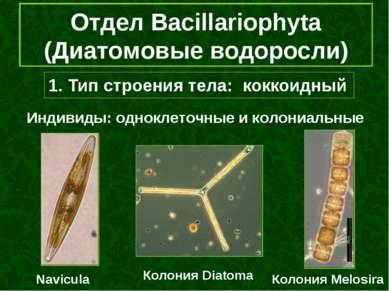 1. Тип строения тела: коккоидный Отдел Bacillariophyta (Диатомовые водоросли)...
