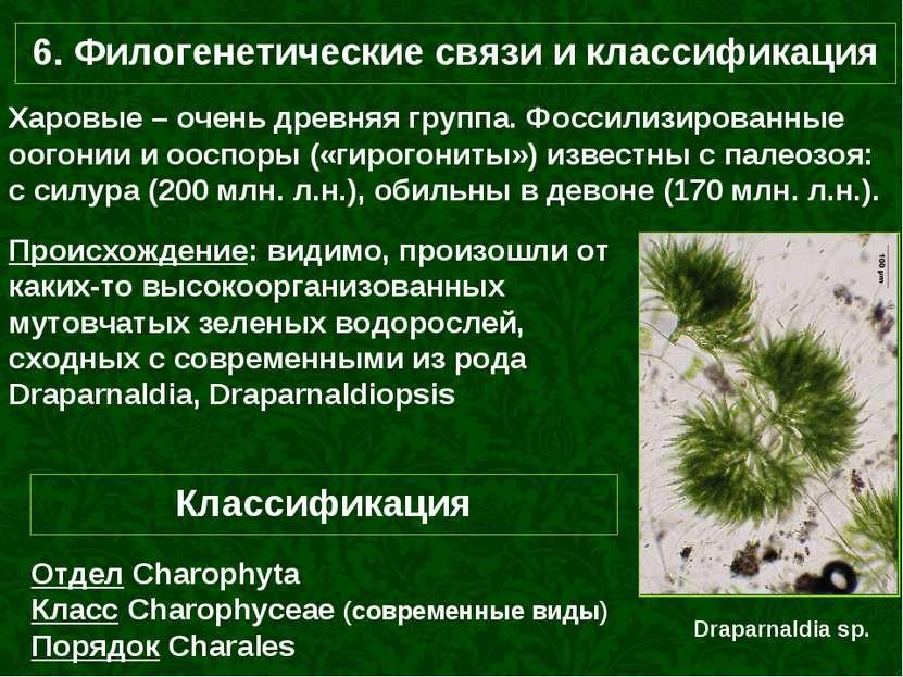 6. Филогенетические связи и классификация Харовые – очень древняя группа. Фос...