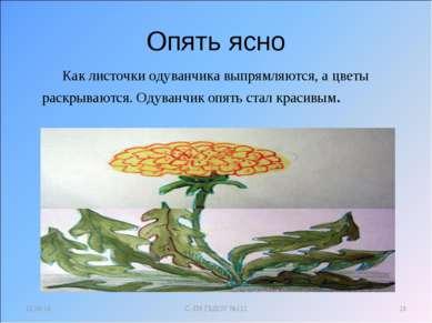 Опять ясно Как листочки одуванчика выпрямляются, а цветы раскрываются. Одуван...