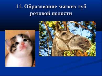 11. Образование мягких губ ротовой полости