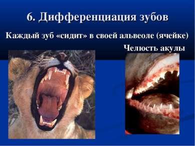 6. Дифференциация зубов Каждый зуб «сидит» в своей альвеоле (ячейке) Челюсть ...