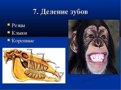 7. Деление зубов Резцы Клыки Коренные