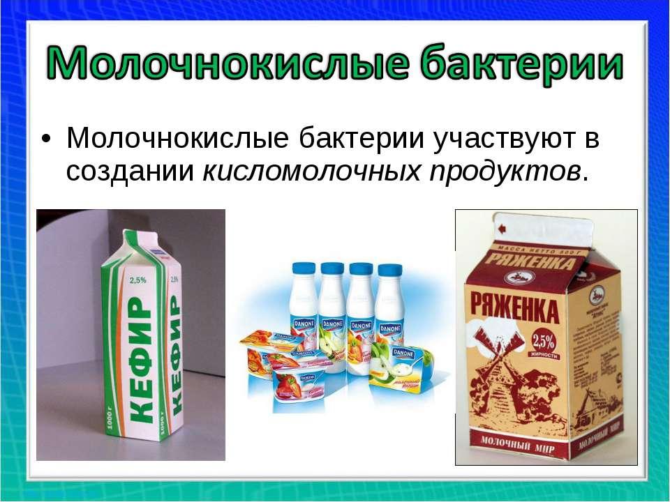 Молочнокислые бактерии участвуют в создании кисломолочных продуктов.