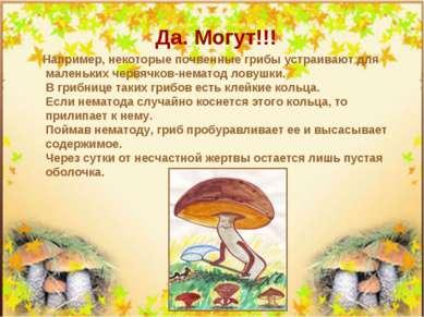 Да. Могут!!! Например, некоторые почвенные грибы устраивают для маленьких чер...