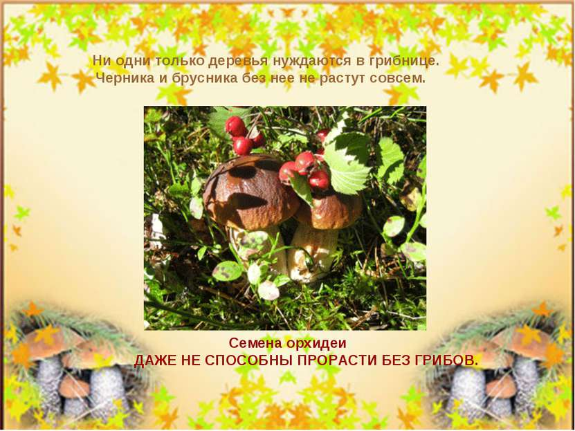 Ни одни только деревья нуждаются в грибнице. Черника и брусника без нее не ра...