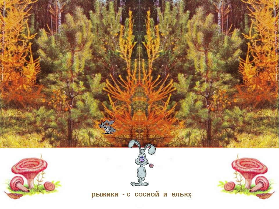рыжики - с сосной и елью;