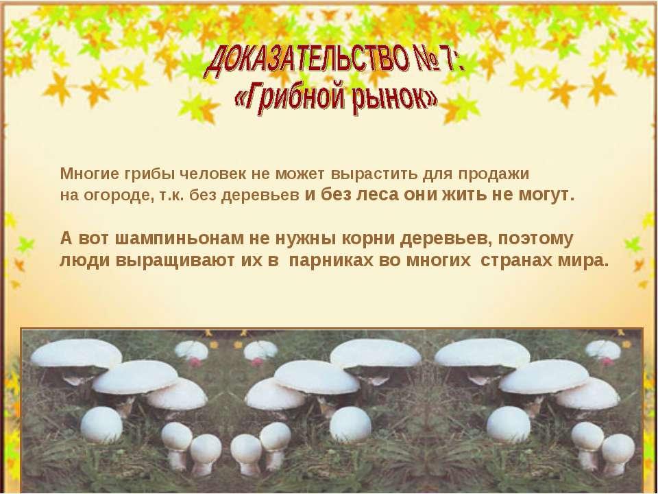 Многие грибы человек не может вырастить для продажи на огороде, т.к. без дере...
