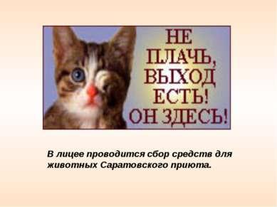 В лицее проводится сбор средств для животных Саратовского приюта.