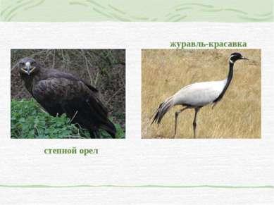 степной орел журавль-красавка