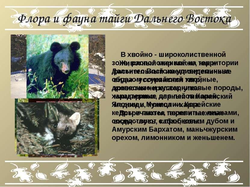 Флора и фауна тайги Дальнего Востока В хвойно - широколиственной зоне, распол...