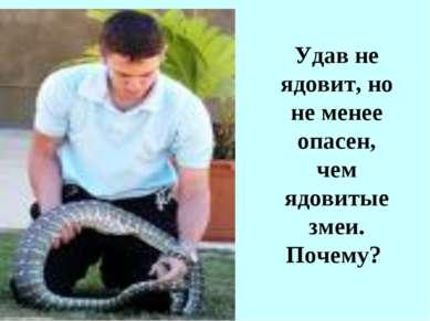 Удав не ядовит, но не менее опасен, чем ядовитые змеи. Почему?