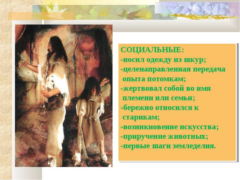 СОЦИАЛЬНЫЕ: -носил одежду из шкур; -целенаправленная передача опыта потомкам;...