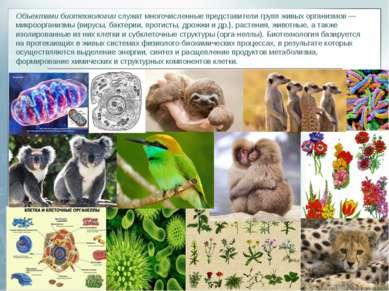 Объектами биотехнологиислужат многочисленные представители групп живых орган...