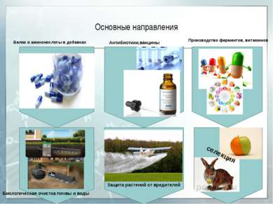 Основные направления Производство ферментов, витаминов Антибиотики,вакцины Бе...