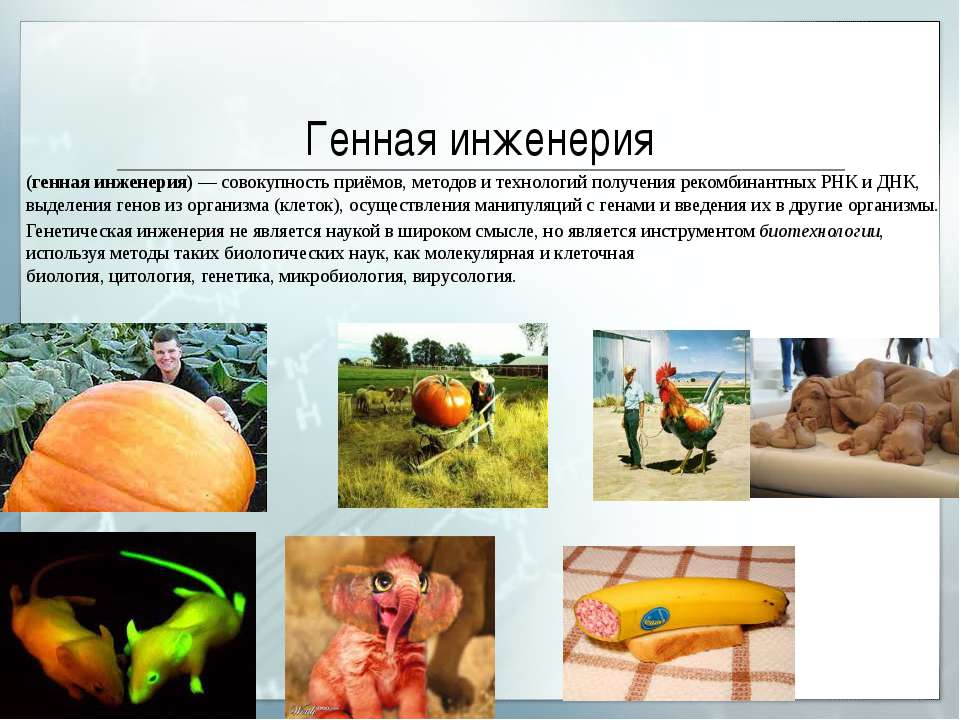 Генная инженерия (генная инженерия)— совокупность приёмов, методов и техноло...