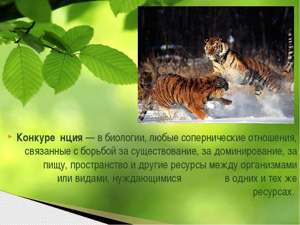 Конкуре нция— в биологии, любыесоперническиеотношения, связанные с борьбой...