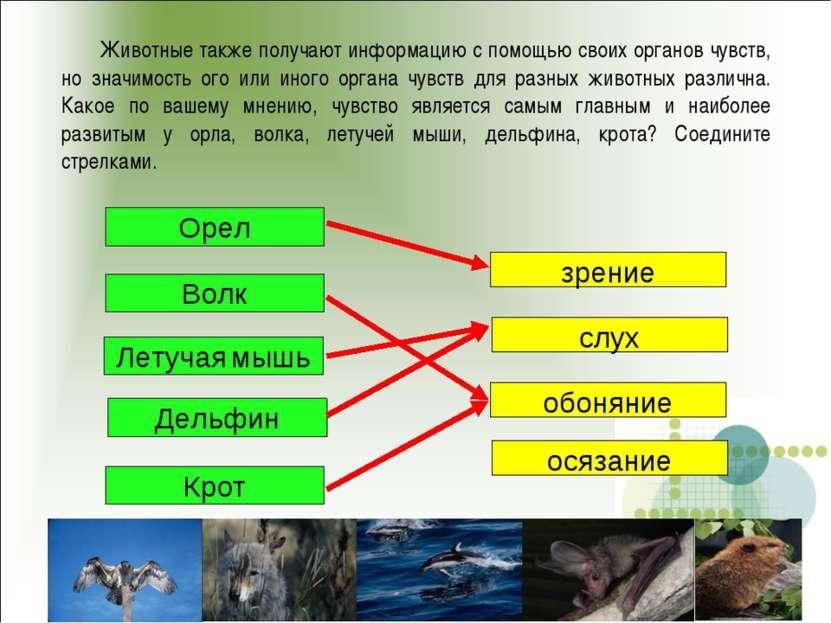 Животные также получают информацию с помощью своих органов чувств, но значимо...