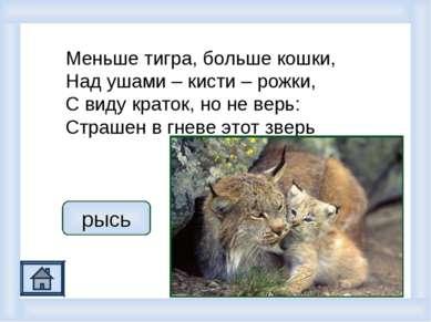Меньше тигра, больше кошки, Над ушами – кисти – рожки, С виду краток, но не в...